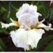 Beautiful Iris Screen Saver download
