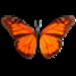 Butterfly On Desktop download