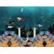 Tropical Aquarium ScreenSaver download