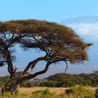 Prøv kræfter med at bestige Kilimanjaro