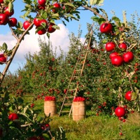 Har du det rette hardware til haven?